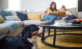 Frühjahrsputztipps für Haustierbesitzer